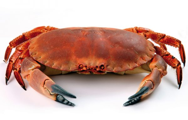 25. CRAB MEAT AND CLAWS